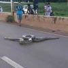 анаконда ползла по дороге