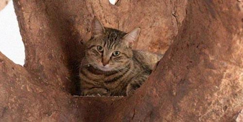 фальшивое дерево в доме