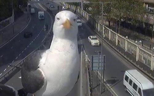 чайка и камера видеонаблюдения