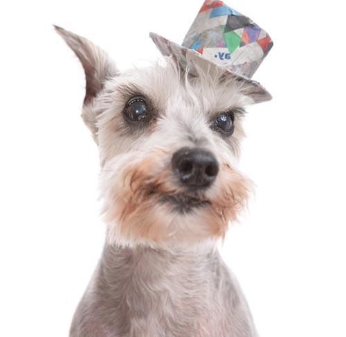 головные уборы для собак