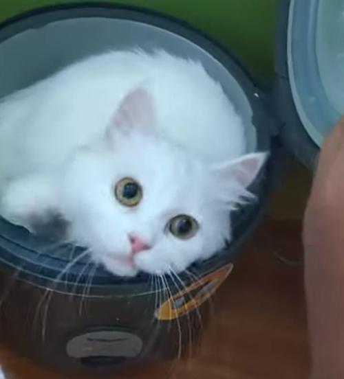 кошка спит в рисоварке