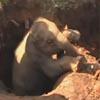 слонят спасли из глубокой ямы