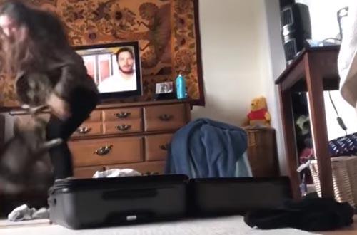 кошка атаковала хозяйку