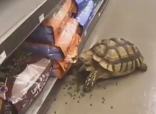 черепаха украла собачий корм