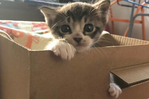 котёнка спасли из стены