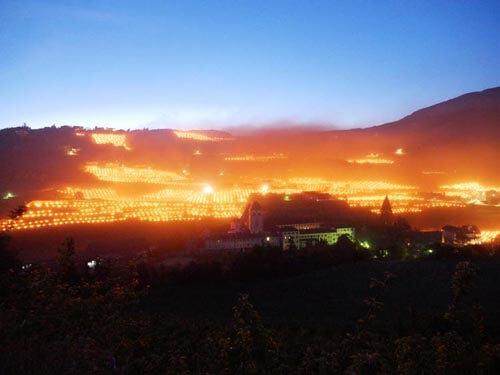 виноградники с пылающими факелами