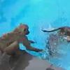 бабуины пользуются бассейном