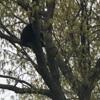 любопытный медведь на улице