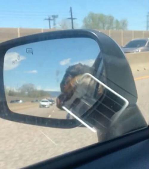 пёс устал во время похода