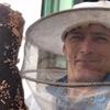 пчёлы в многоквартирном доме