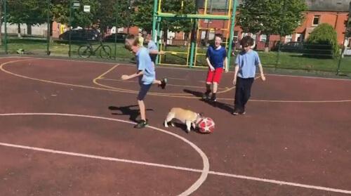 собака обожает играть в футбол