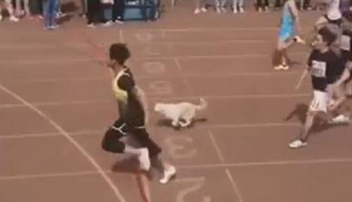 собака присоединилась к забегу