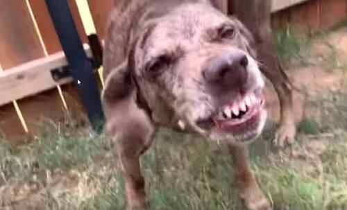 собака вырыла яму в саду