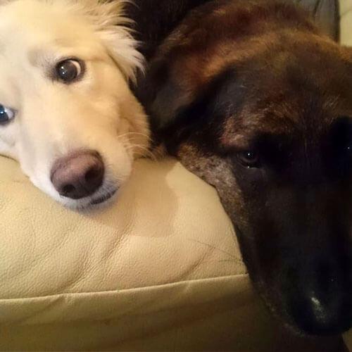 подушка с портретом пса