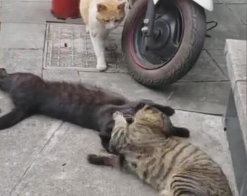 рыжему коту изменили