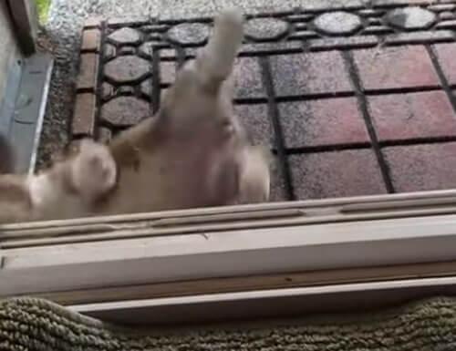 жизненные трудности щенка
