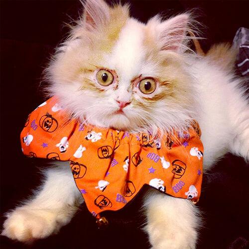 новый сварливый кот