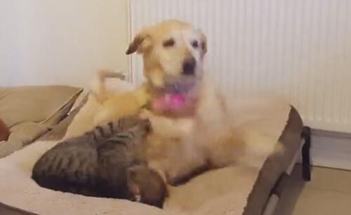 кошка втирается в доверие
