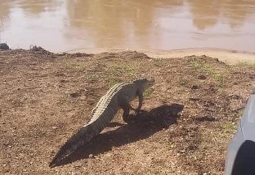 аллигатор расположился на крыльце
