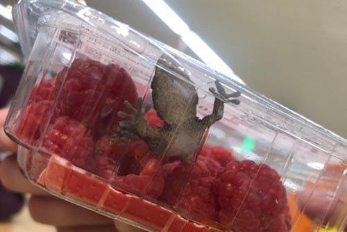 ящерица в коробке с малиной