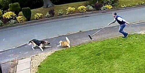 собака напала на кота