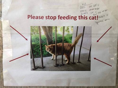 разъевшийся кот в колледже
