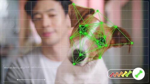 онлайн-шопинг для собак