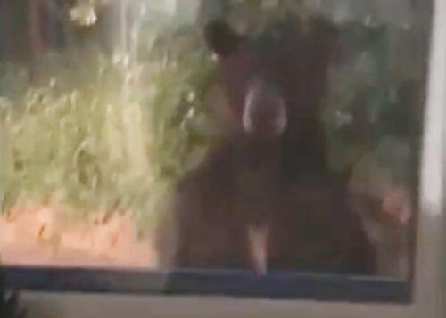 наглый медведь возле дома