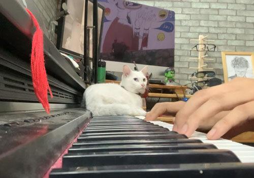 серенады для любимой кошки