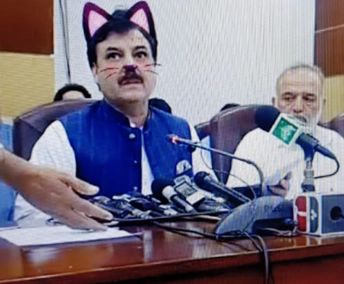 политик превратился в кошку