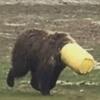медведь в пластиковом ведре