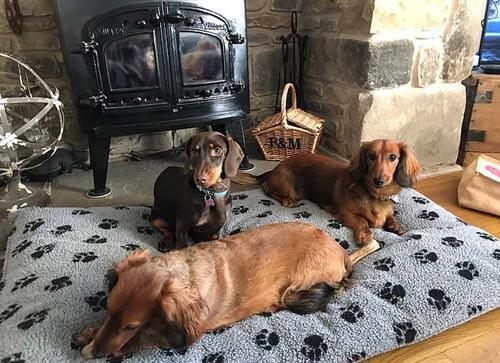 отель для сосисочных собак