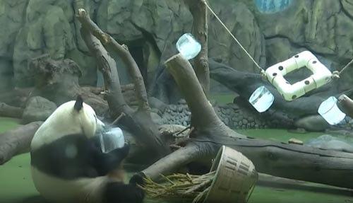 ледяные игрушки для панд