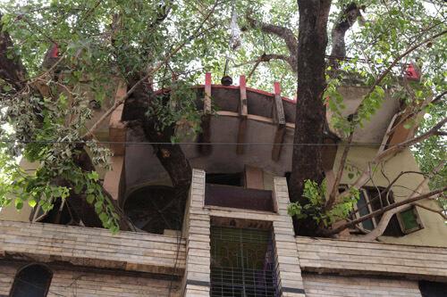 дом вокруг гигантского дерева