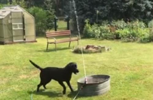 для собаки устроили фонтан