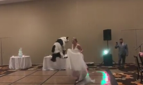 танец невесты и её пса