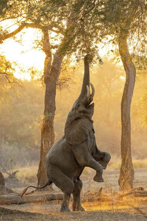 сообразительный голодный слон