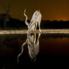 животные на ночном водопое