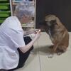 бродячая собака в аптеке