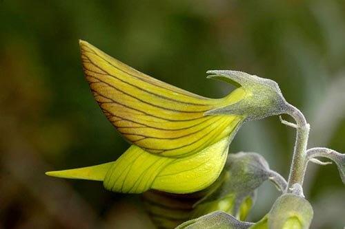 цветы в виде птичек