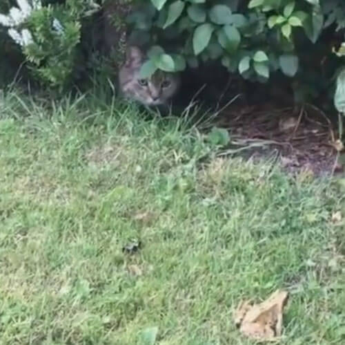 дружелюбный кот выследил лягушку