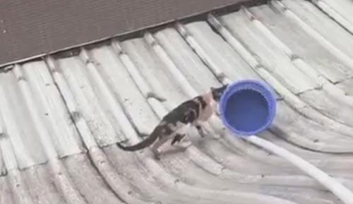 спасение кошки со скользкой крыши