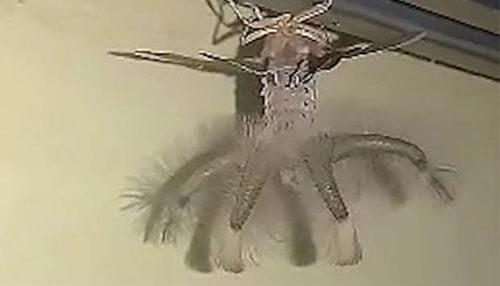 инопланетное насекомое на потолке