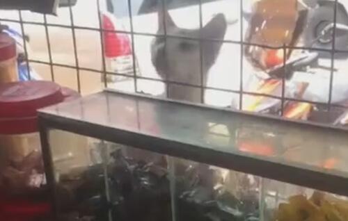 кошка не заплатила за конфету