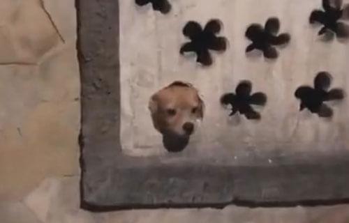 крошечная собачка охраняет дом