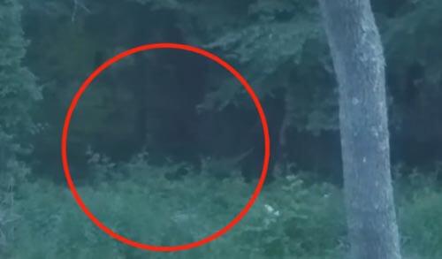 жутковатая фигура в лесу