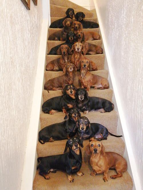 идеальная фотография с собаками