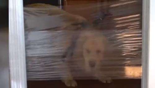 шутка с собаками и плёнкой