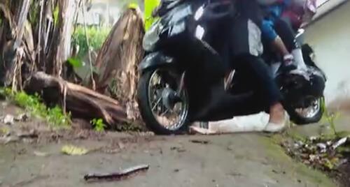 многоножка спровоцировала аварию