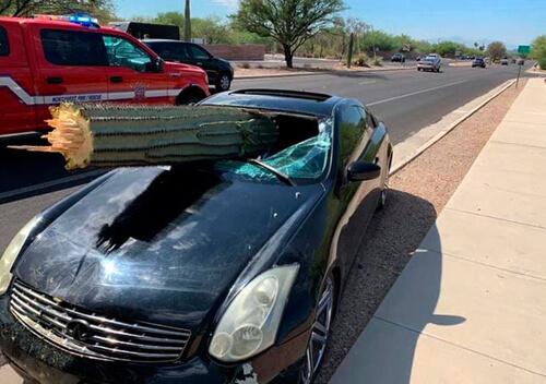 машина врезалась в кактус